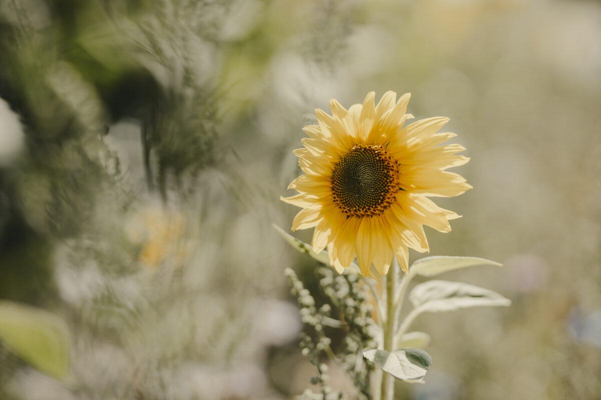 ©formatfrei. der blog. Sommer, Sonne, Sonnenschein